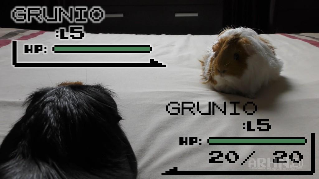 Grunio Battle
